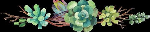 succulent-border
